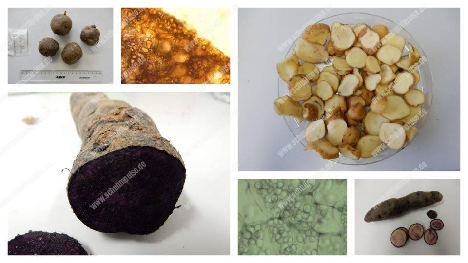 Kartoffel-Projekt Vorüberlegungen